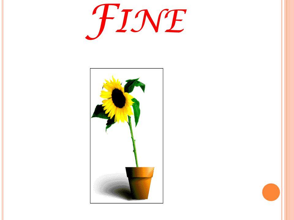 F INE