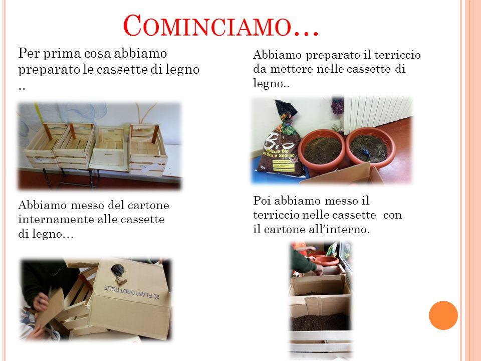 C OMINCIAMO … Per prima cosa abbiamo preparato le cassette di legno..