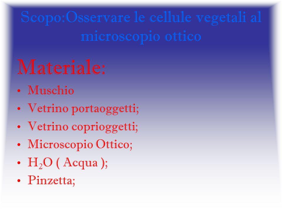 Scopo:Osservare le cellule vegetali al microscopio ottico Materiale: Muschio Vetrino portaoggetti; Vetrino coprioggetti; Microscopio Ottico; H 2 O ( A