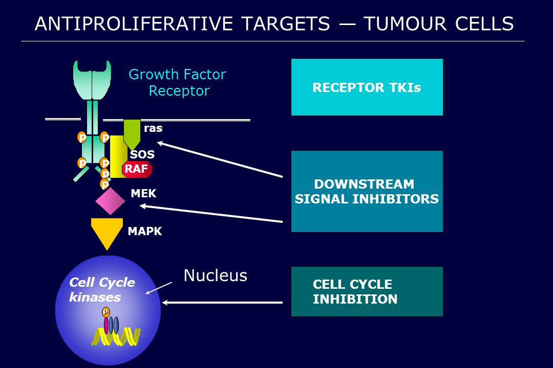 DOWNSTREAM SIGNAL INHIBITORS P Cell Cycle kinases Nucleus ANTIPROLIFERATIVE TARGETS — TUMOUR CELLS RECEPTOR TKIs CELL CYCLE INHIBITION MEK MAPK Growth FactorReceptor SOS ras RAF PP PP P P