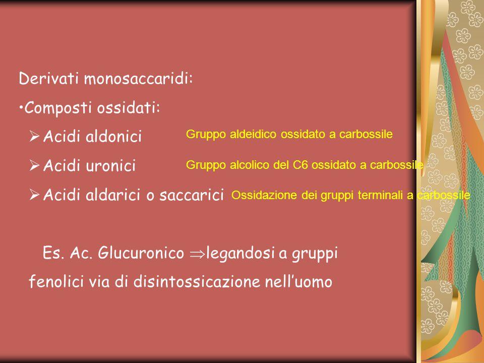 Derivati monosaccaridi: Composti ossidati:  Acidi aldonici  Acidi uronici  Acidi aldarici o saccarici Es. Ac. Glucuronico  legandosi a gruppi feno