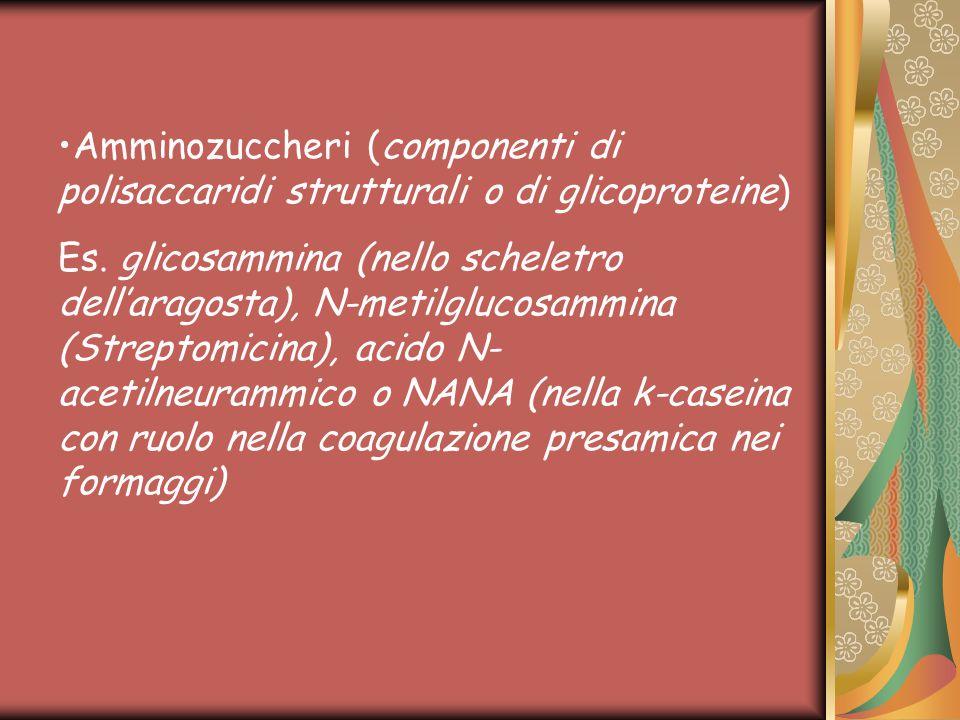 Amminozuccheri (componenti di polisaccaridi strutturali o di glicoproteine) Es.