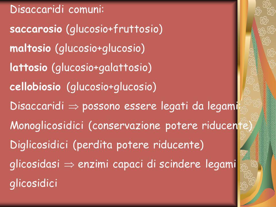 Disaccaridi comuni: saccarosio (glucosio+fruttosio) maltosio (glucosio+glucosio) lattosio (glucosio+galattosio) cellobiosio (glucosio+glucosio) Disacc