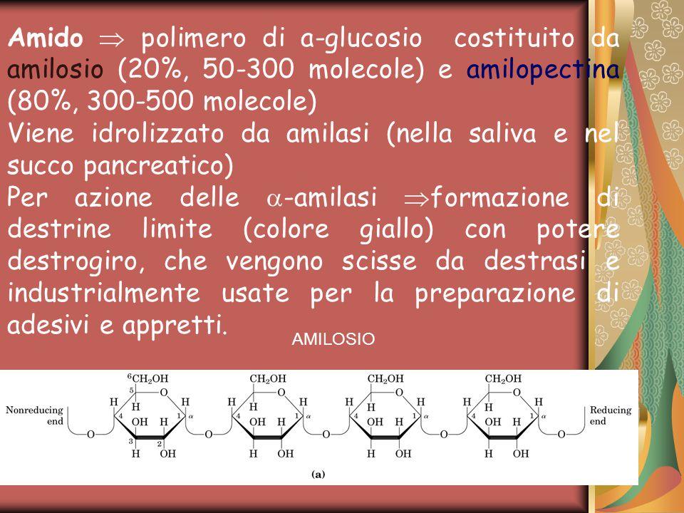 AMILOSIO Amido  polimero di a-glucosio costituito da amilosio (20%, 50-300 molecole) e amilopectina (80%, 300-500 molecole) Viene idrolizzato da amilasi (nella saliva e nel succo pancreatico) Per azione delle  -amilasi  formazione di destrine limite (colore giallo) con potere destrogiro, che vengono scisse da destrasi e industrialmente usate per la preparazione di adesivi e appretti.