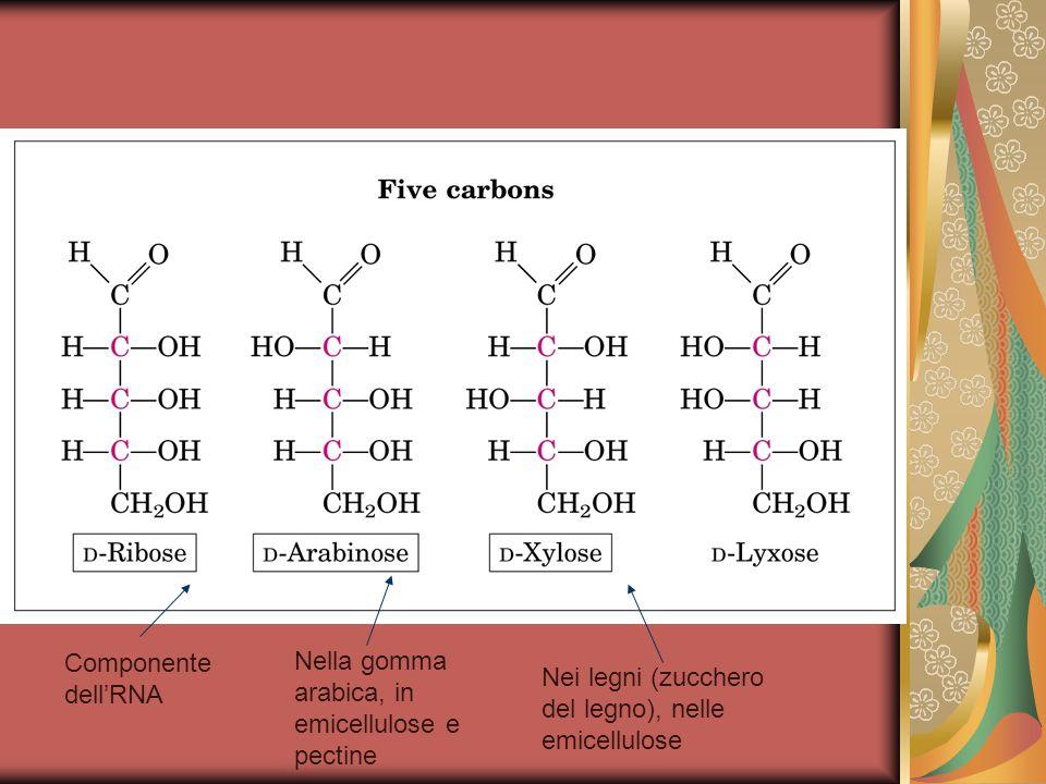 Nella gomma arabica, in emicellulose e pectine Componente dell'RNA Nei legni (zucchero del legno), nelle emicellulose