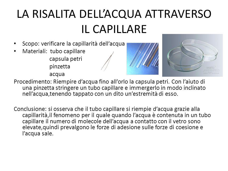 LA RISALITA DELL'ACQUA ATTRAVERSO IL CAPILLARE Scopo: verificare la capillarità dell'acqua Materiali: tubo capillare capsula petri pinzetta acqua Proc