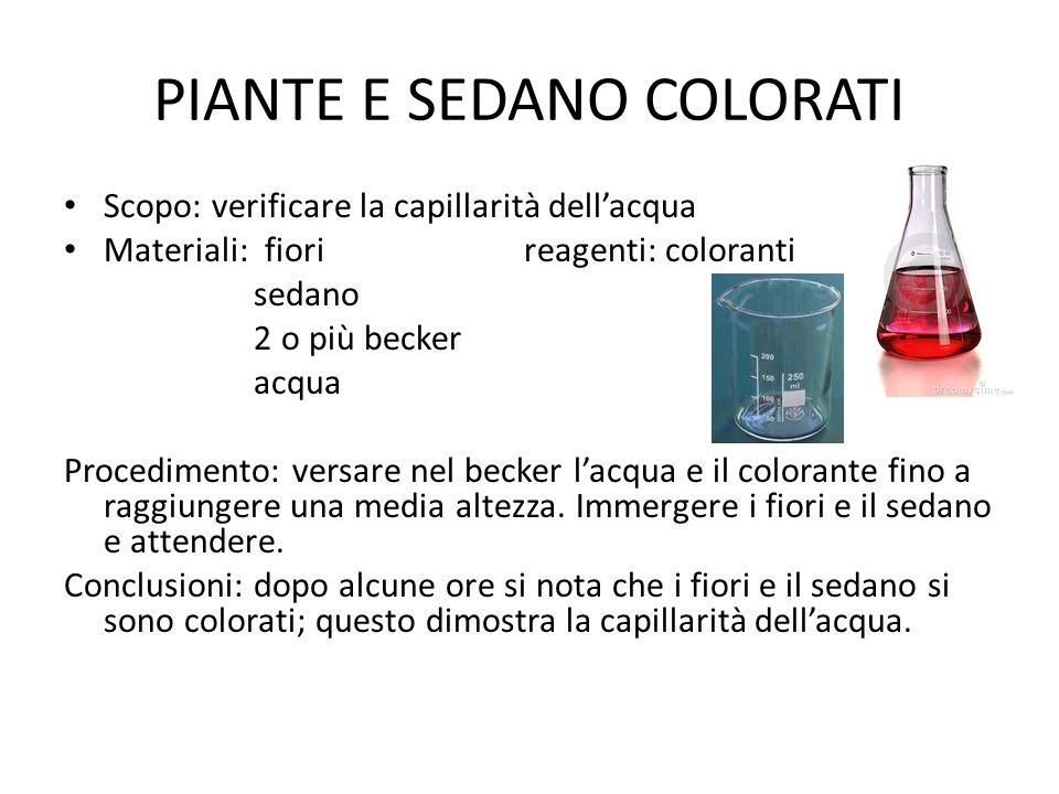 PIANTE E SEDANO COLORATI Scopo: verificare la capillarità dell'acqua Materiali: fiori reagenti: coloranti sedano 2 o più becker acqua Procedimento: ve