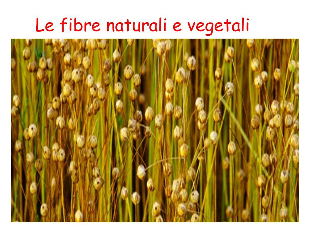 Fibre naturali e vegetali Le fibre naturali rappresentano oggi il 40% delle fibre tessili utilizzate nel mondo, mentre il 60% è rappresentato dalle fibre sintetiche e artificiali.
