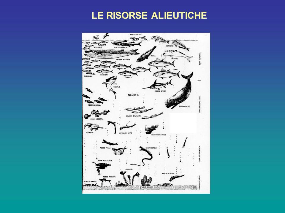 Risorse pelagiche LE RISORSE ALIEUTICHE