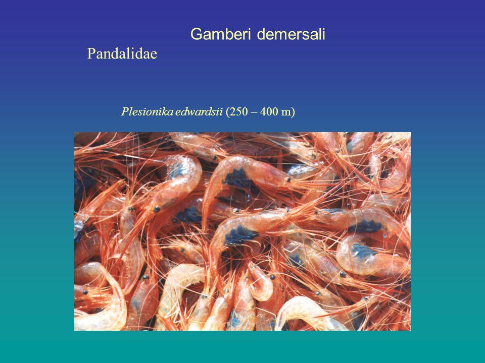 Gamberi demersali Pandalidae Plesionika edwardsii (250 – 400 m)
