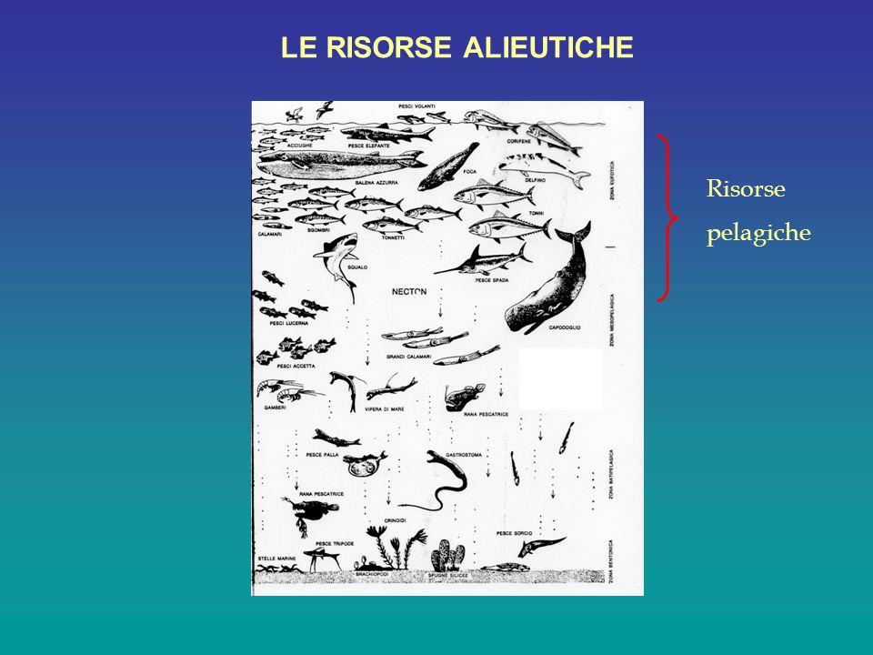 Specie demersali LE RISORSE ALIEUTICHE