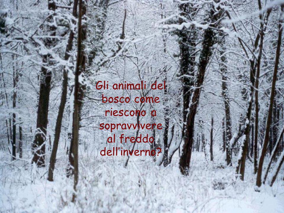 Gli animali del bosco come riescono a sopravvivere al freddo dell'inverno?