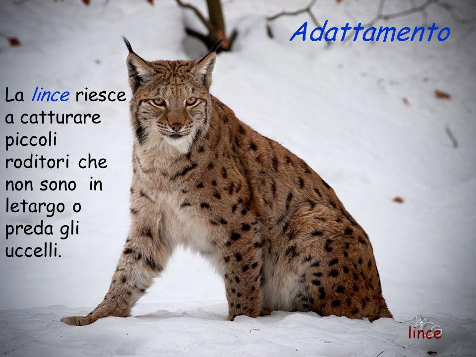 Alcuni animali, durante l'inverno vanno in letargo poiché hanno difficoltà a trovare il cibo.