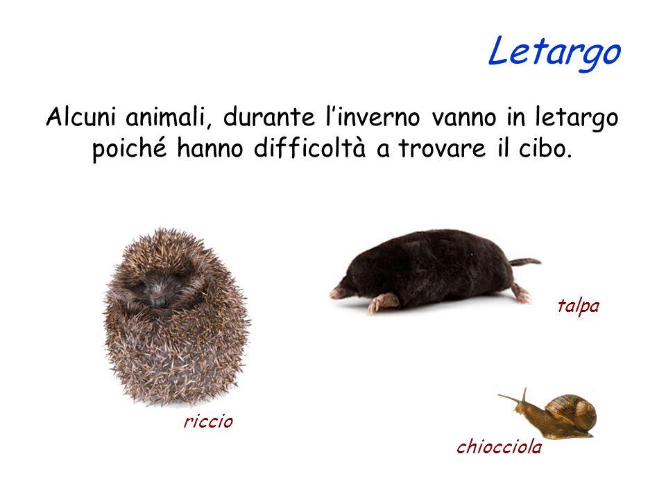 Alcuni animali, durante l'inverno vanno in letargo poiché hanno difficoltà a trovare il cibo. riccio Letargo talpa chiocciola