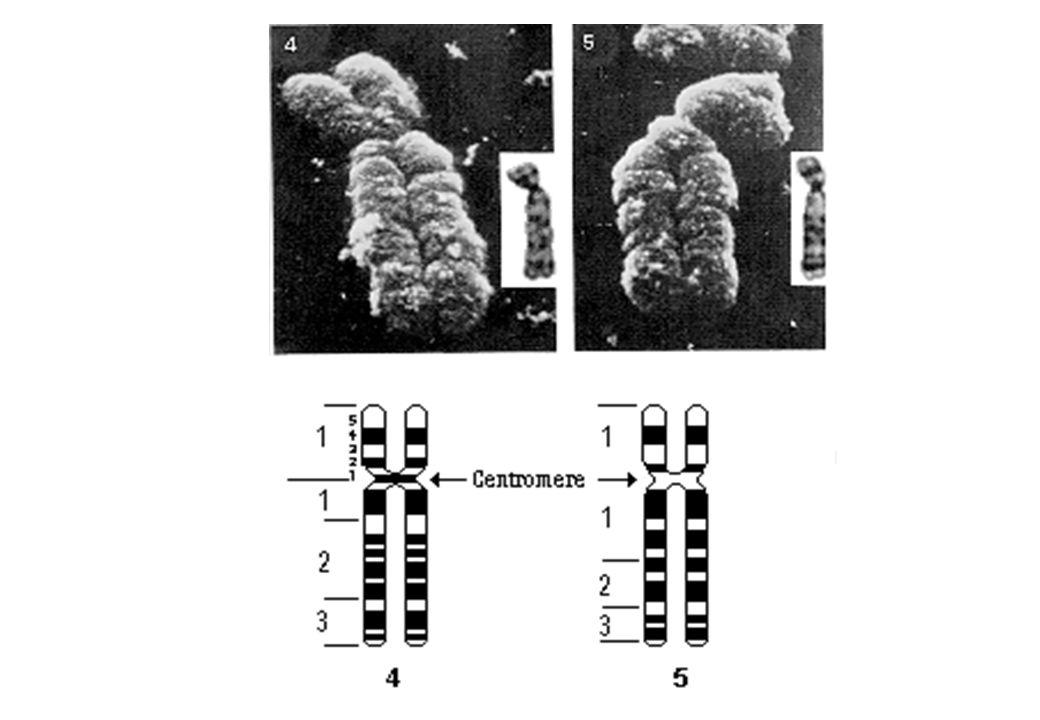 Malattie dovute ad aberrazioni cromosomiche.1.