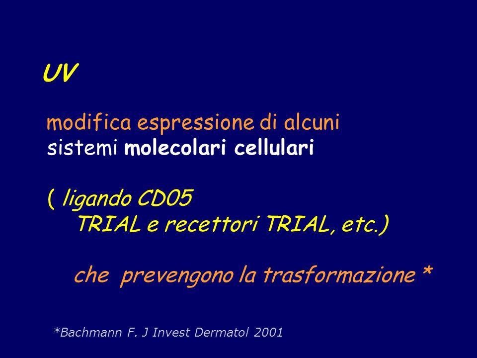 UV modifica espressione di alcuni sistemi molecolari cellulari ( ligando CD05 TRIAL e recettori TRIAL, etc.) che prevengono la trasformazione * *Bachm