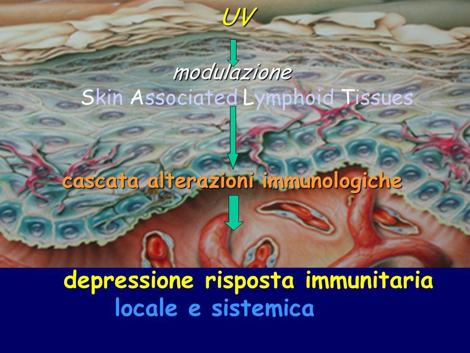 cascata alterazioni immunologiche depressione risposta immunitaria locale e sistemica UV UV modulazione modulazione Skin Associated Lymphoid Tissues