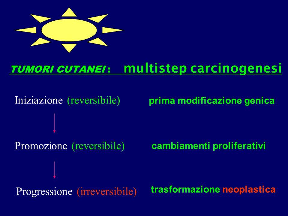 TUMORI CUTANEI : multistep carcinogenesi Iniziazione (reversibile) prima modificazione genica Promozione (reversibile) Progressione (irreversibile) ca