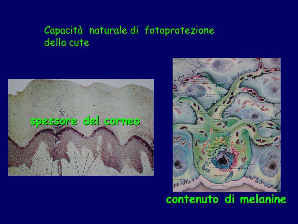 spessore del corneo contenuto di melanine Capacità naturale di fotoprotezione della cute