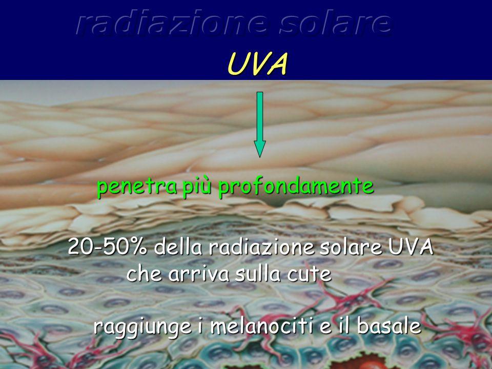 UVA penetra più profondamente 20-50% della radiazione solare UVA che arriva sulla cute 20-50% della radiazione solare UVA che arriva sulla cute raggiu
