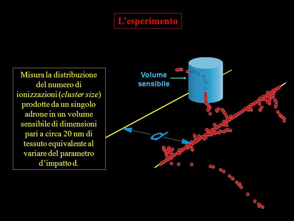 Volume sensibile L'esperimento Misura la distribuzione del numero di ionizzazioni (cluster size) prodotte da un singolo adrone in un volume sensibile