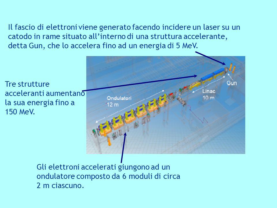 Gli elettroni accelerati giungono ad un ondulatore composto da 6 moduli di circa 2 m ciascuno. Il fascio di elettroni viene generato facendo incidere