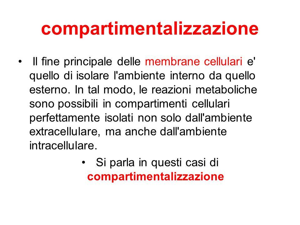 compartimentalizzazione Il fine principale delle membrane cellulari e' quello di isolare l'ambiente interno da quello esterno. In tal modo, le reazion