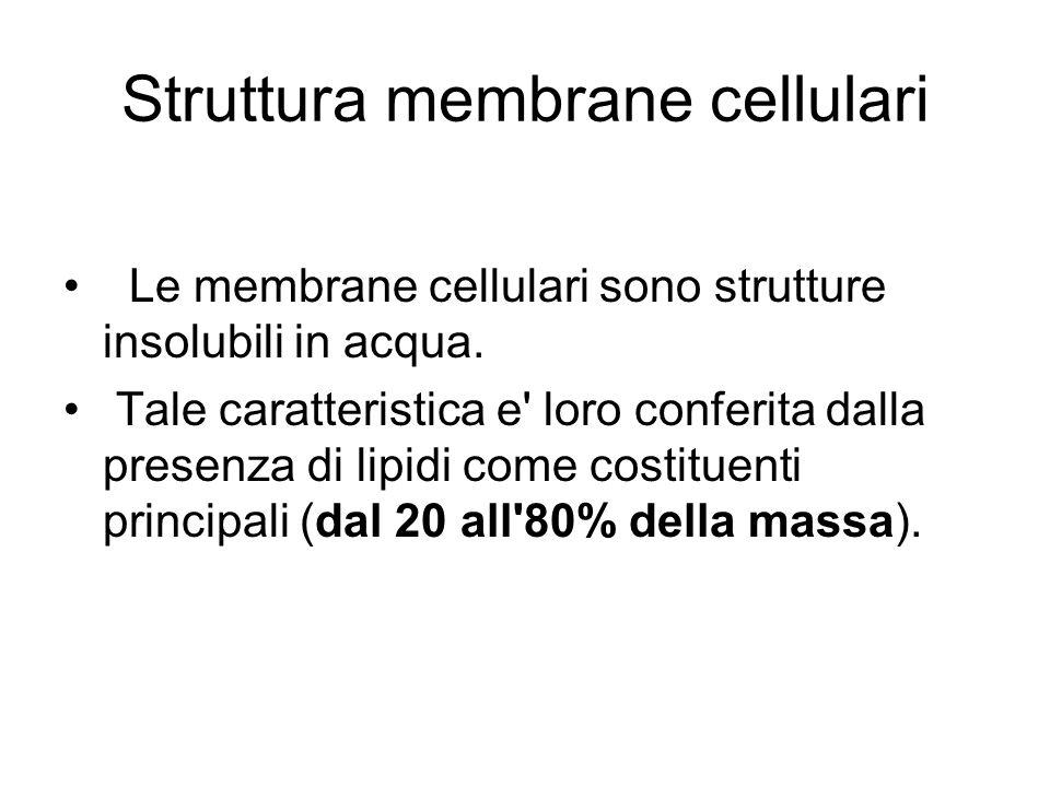 Struttura membrane cellulari Le membrane cellulari sono strutture insolubili in acqua. Tale caratteristica e' loro conferita dalla presenza di lipidi