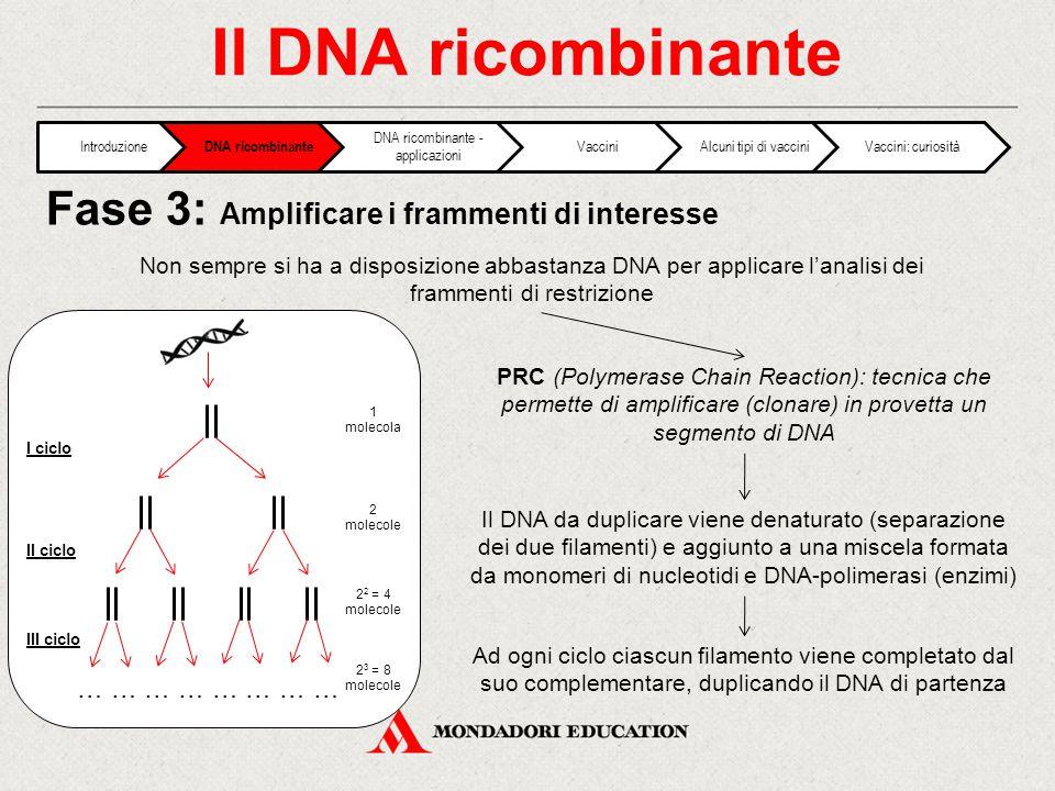 Il DNA ricombinante Non sempre si ha a disposizione abbastanza DNA per applicare l'analisi dei frammenti di restrizione PRC (Polymerase Chain Reaction