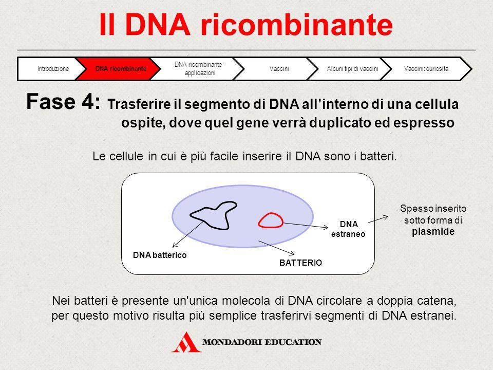 Il DNA ricombinante Le cellule in cui è più facile inserire il DNA sono i batteri. Fase 4: Trasferire il segmento di DNA all'interno di una cellula os