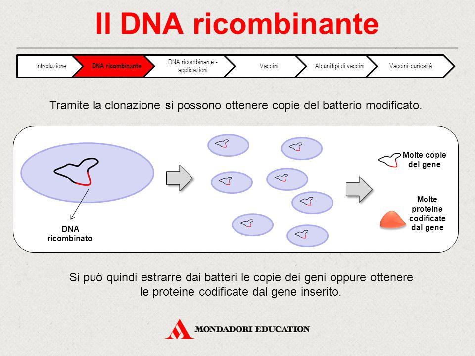 Il DNA ricombinante Tramite la clonazione si possono ottenere copie del batterio modificato. Si può quindi estrarre dai batteri le copie dei geni oppu