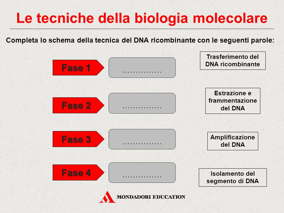 Completa lo schema della tecnica del DNA ricombinante con le seguenti parole: Isolamento del segmento di DNA Estrazione e frammentazione del DNA Trasf