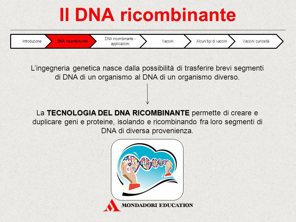 Il DNA ricombinante 4 FASI FASE 1: Estrarre il DNA e frammentarlo in segmenti definiti FASE 2: Isolare il segmento contenente il gene di interesse FASE 3: Amplificare i frammenti di interesse FASE 4: Trasferire il segmento di DNA all'interno di una cellula ospite, dove quel gene verrà duplicato ed espresso Introduzione DNA ricombinante DNA ricombinante - applicazioni VacciniAlcuni tipi di vacciniVaccini: curiosità