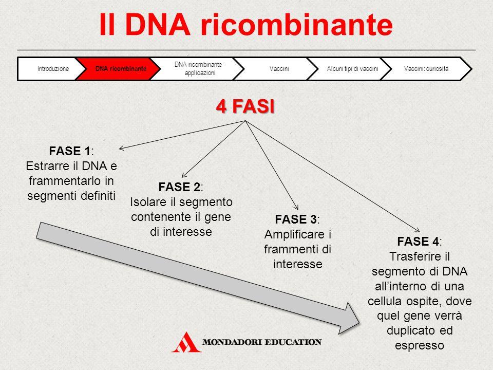 Il DNA ricombinante 4 FASI FASE 1: Estrarre il DNA e frammentarlo in segmenti definiti FASE 2: Isolare il segmento contenente il gene di interesse FAS