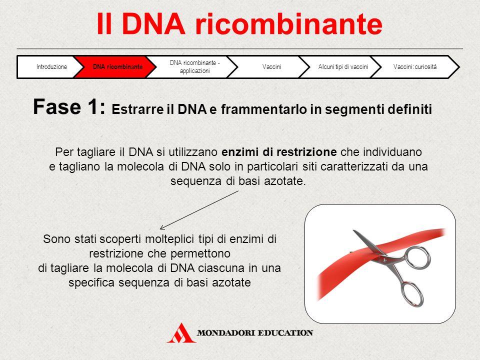 Il DNA ricombinante Per tagliare il DNA si utilizzano enzimi di restrizione che individuano e tagliano la molecola di DNA solo in particolari siti caratterizzati da una sequenza di basi azotate.