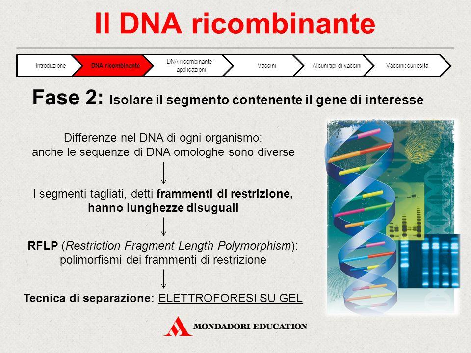 Il DNA ricombinante I segmenti tagliati, detti frammenti di restrizione, hanno lunghezze disuguali RFLP (Restriction Fragment Length Polymorphism): polimorfismi dei frammenti di restrizione Fase 2: Isolare il segmento contenente il gene di interesse Differenze nel DNA di ogni organismo: anche le sequenze di DNA omologhe sono diverse Tecnica di separazione: ELETTROFORESI SU GEL Introduzione DNA ricombinante DNA ricombinante - applicazioni VacciniAlcuni tipi di vacciniVaccini: curiosità