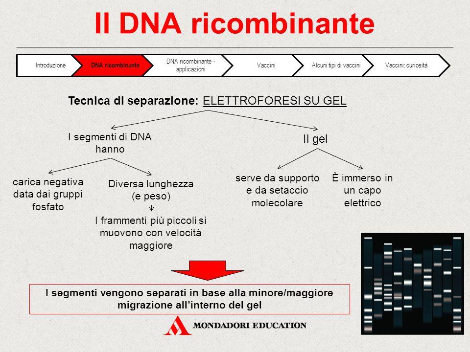 Il DNA ricombinante carica negativa data dai gruppi fosfato I segmenti vengono separati in base alla minore/maggiore migrazione all'interno del gel Tecnica di separazione: ELETTROFORESI SU GEL Diversa lunghezza (e peso) I segmenti di DNA hanno I frammenti più piccoli si muovono con velocità maggiore serve da supporto e da setaccio molecolare Il gel È immerso in un capo elettrico Introduzione DNA ricombinante DNA ricombinante - applicazioni VacciniAlcuni tipi di vacciniVaccini: curiosità