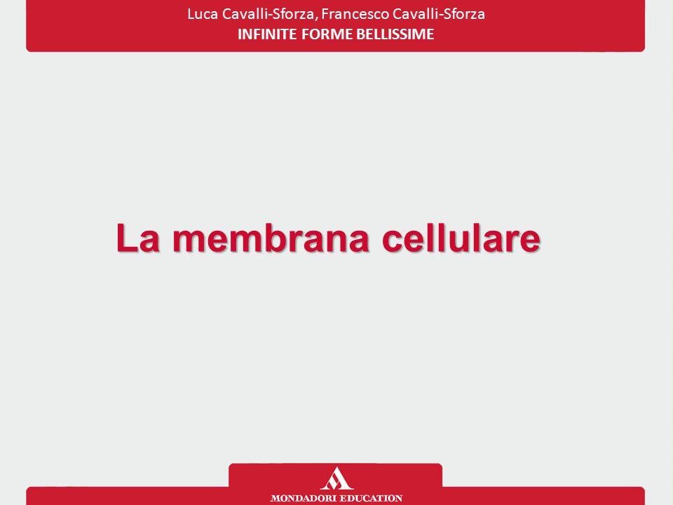 Luca Cavalli-Sforza, Francesco Cavalli-Sforza INFINITE FORME BELLISSIME La membrana cellulare