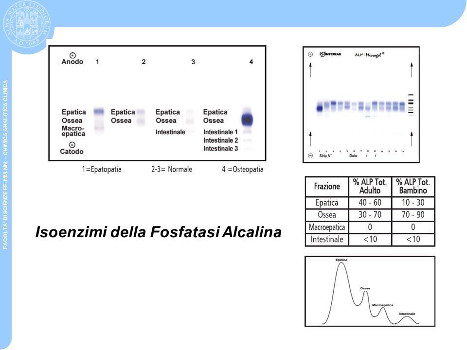 FACOLTA' DI SCIENZE FF. MM. NN. – CHIMICA ANALITICA CLINICA Esochinasi (HK) e glucochinasi (GK) Glucosio + ATP  Glucosio-6-fosfato + ADP  glucosio 