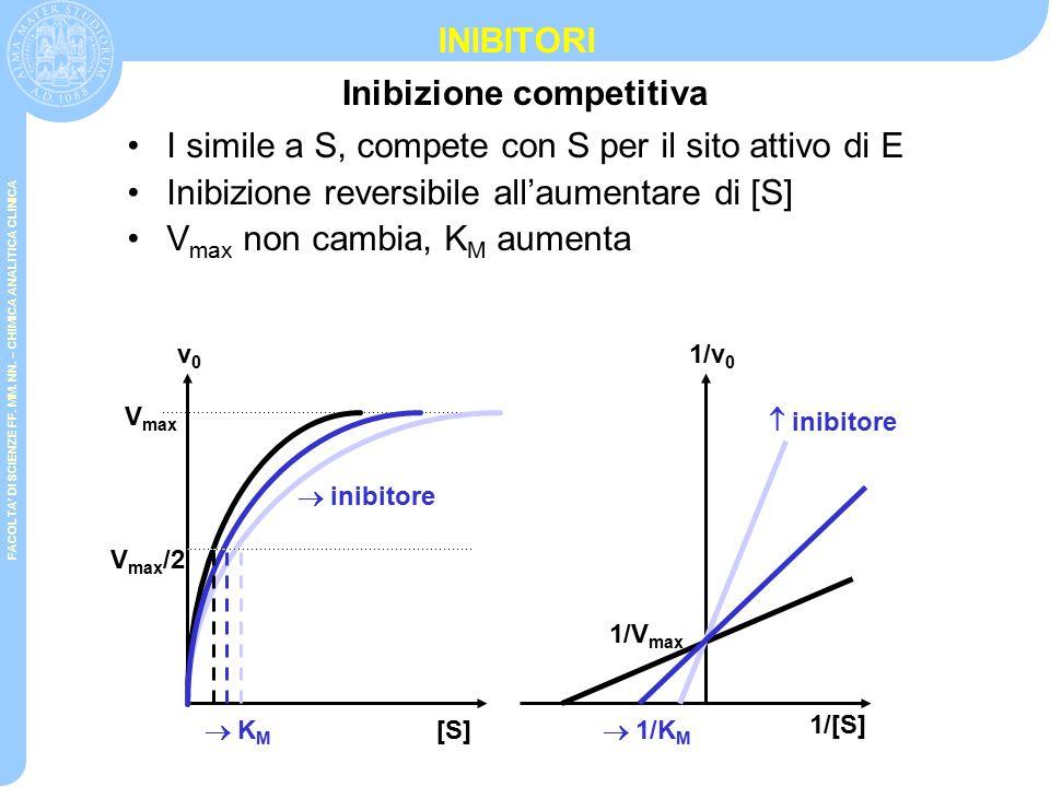 Rappresentazione grafica delle reazioni enzimatiche 1/[S] 1/V 0 1/K M 1/V max V max [S] KMKM V max /2 Grafico di Lineweaver-Burk V0V0