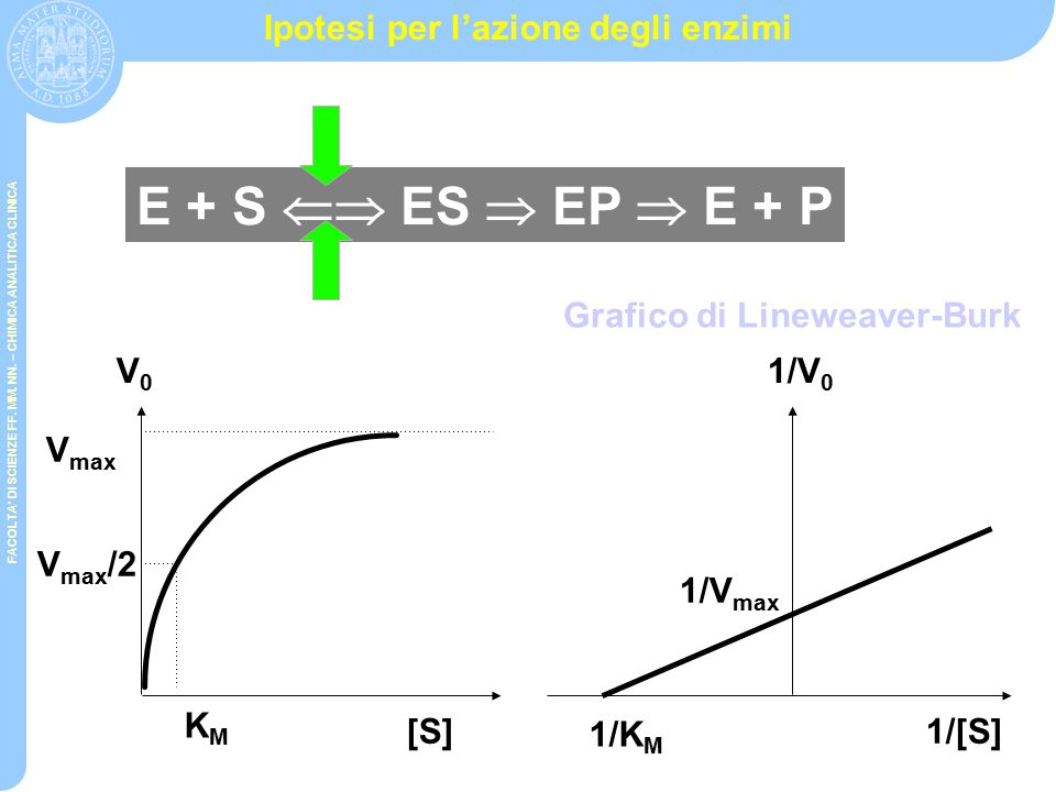 FACOLTA' DI SCIENZE FF. MM. NN. – CHIMICA ANALITICA CLINICA Cinetiche chimiche vs cinetiche enzimatiche Velocità iniziale [A] Cinetica enzimatica Cine