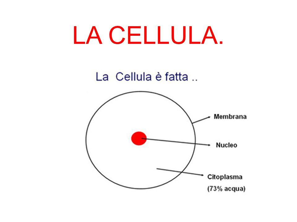 LA CELLULA.