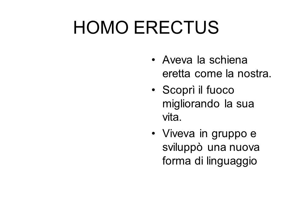 IL FUOCO L' homo erectus usava il fuoco per: 1.Cuocere la carne, 2.Riscaldarsi, 3.Illuminare, 4.Tenere lontano i predatori, 5.Indurire gli attrezzi.