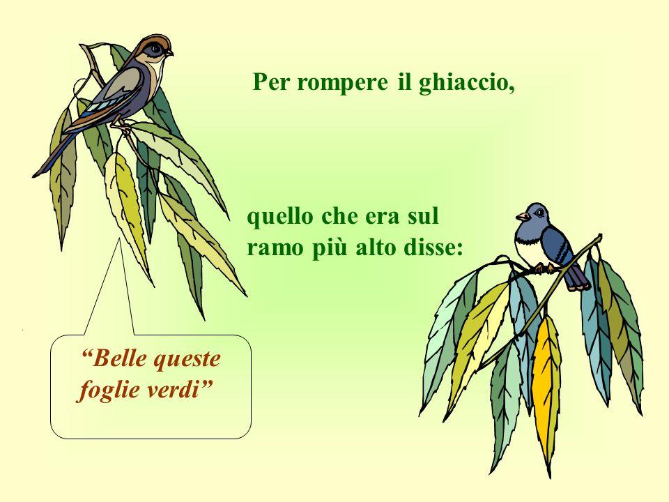 Un giorno due uccellini, posati sui rami di un si godevano il tepore della primavera.