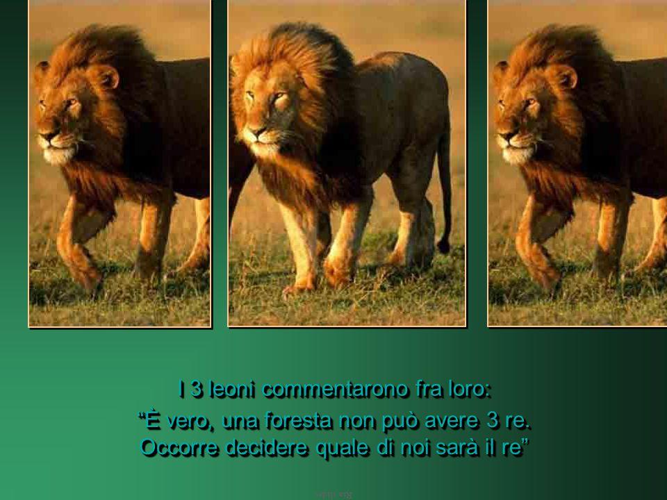 Ria slides Ma c'è un problema: ci sono 3 leoni forti.