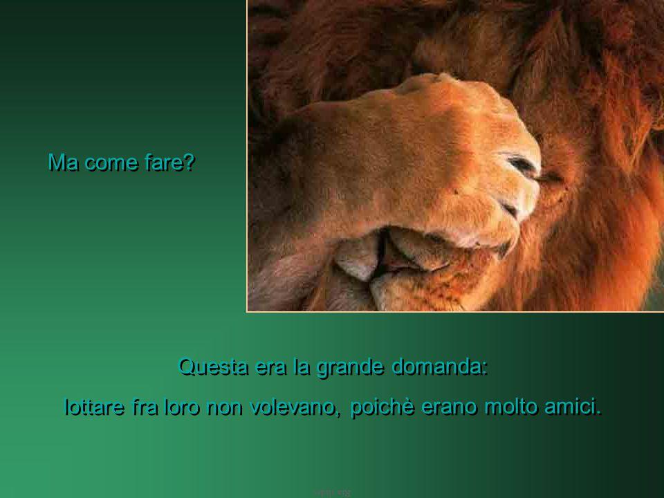 Ria slides I 3 leoni commentarono fra loro: È vero, una foresta non può avere 3 re.