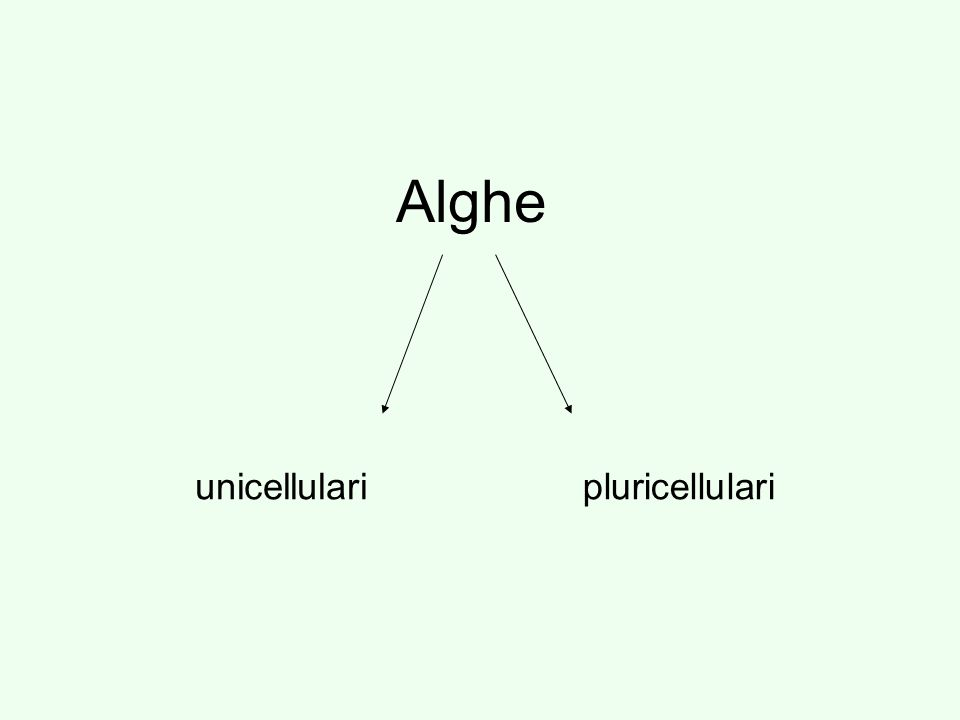 Alghe unicellularipluricellulari