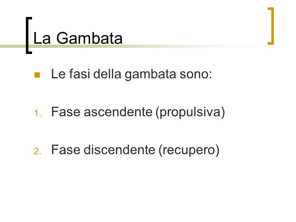 La Gambata Le fasi della gambata sono: 1.Fase ascendente (propulsiva) 2.