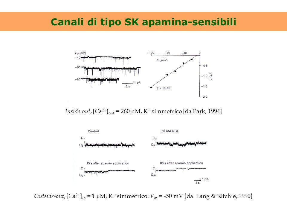 Canali di tipo SK apamina-sensibili Inside-out, [Ca 2+ ] out = 260 nM, K + simmetrico [da Park, 1994] Outside-out, [Ca 2+ ] in = 1  M, K + simmetrico