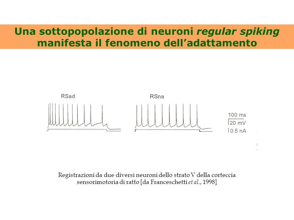 Una sottopopolazione di neuroni regular spiking manifesta il fenomeno dell'adattamento Registrazioni da due diversi neuroni dello strato V della corte